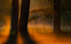 Picture night, fog, tree