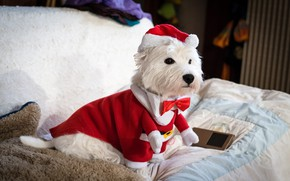 Picture look, red, pose, room, sofa, legs, dog, Christmas, costume, outfit, New year, white, fur, image, …