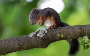 Picture nature, pose, tree, baby, protein, rodent, squirrel