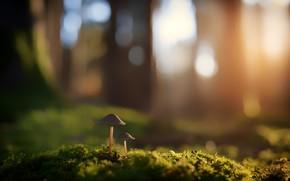 Picture Nature, Grass, Plant, Plants, Nature, Grass, Flora, Plants, Mushroom, Flora, Plant, Close-Up, by Johannes Plenio, …