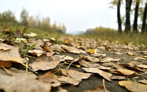 Picture road, autumn, the sky, leaves, macro, nature