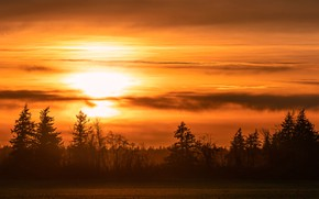 Picture field, forest, the sky, trees, sunset