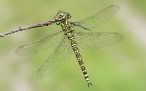 Picture sprig, background, dragonfly