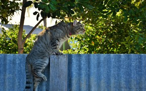 Picture cat, nature, the fence