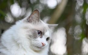 Picture cat, background, bokeh, Fleur Walton