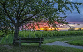 Picture sunset, vineyard, bench