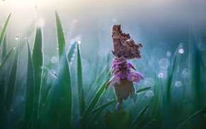 Picture flower, grass, nature, butterfly, bokeh, Roberto Aldrovandi
