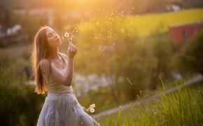 Picture girl, light, dandelion
