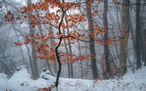 Picture winter, forest, tree