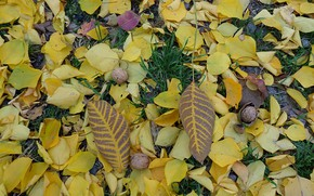 Picture autumn, nuts, falling leaves, gold
