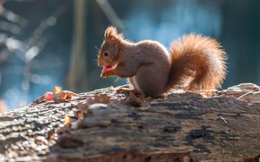 Picture nature, pose, protein, berry, log, rodent, meal