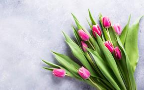 Picture background, bouquet, tulips, Iryna Melnyk