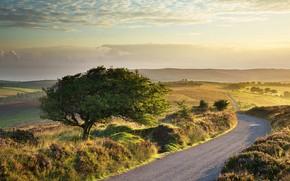 Picture road, autumn, tree, England, Devon, Somerset, Exmoor national Park