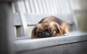 Picture background, dog, bench
