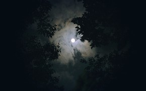 Picture forest, the sky, clouds, trees, night, nature, the moon, the full moon