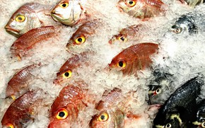 Picture food, ice, fish