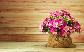 Picture flowers, summer, pink, pink, flowers
