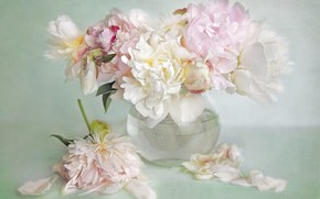 Picture glass, water, flowers, background, bouquet, petals, art, vase, pink, pitcher, white, painting, peonies