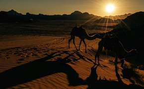 Picture the sun, light, sunset, nature, hills, desert, the evening, camel, shadows, Sands, camels