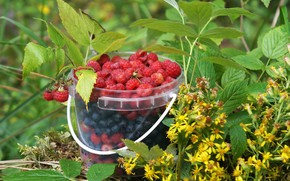 Picture leaves, flowers, berries, raspberry, still life