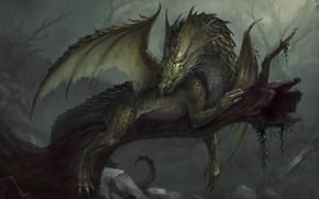 Picture dragon, fantasy, art, Dragon, Nicolás Espinoza
