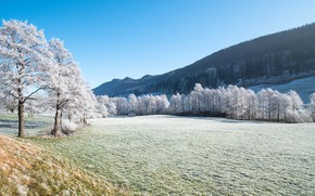 Picture winter, frost, field, forest, grass, light, snow, trees, landscape, mountains, nature, hills, winter, view, slope, …