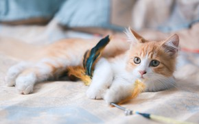 Picture cat, look, feathers, muzzle, cat