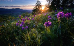 Picture greens, summer, grass, the sun, landscape, sunset, flowers, mountains, nature, hills, slope, Russia, Altay
