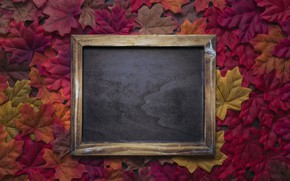 Picture autumn, leaves, background, colorful, red, Board, maple, wood, background, autumn, leaves, autumn, maple