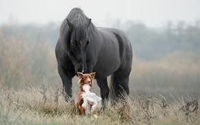 Picture grass, horse, dog, friends, Svetlana Pisareva