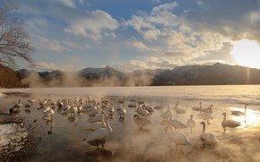 Picture winter, the sky, the sun, clouds, light, snow, mountains, birds, nature, fog, shore, tops, pack, …