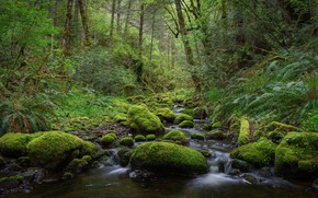 Picture forest, landscape, nature, stream, stones, beauty