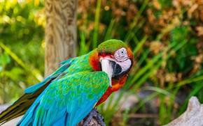 Picture leaves, nature, pose, green, bird, branch, parrot, bokeh, Ara