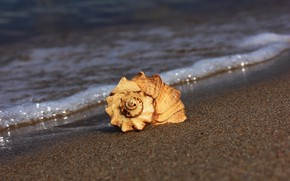 Picture sand, beach, shell