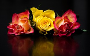 Picture flowers, reflection, the dark background, bright, roses, three, trio, buds