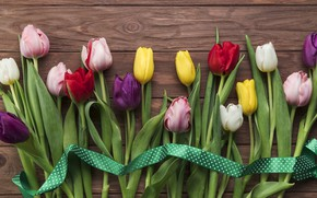 Picture flowers, colorful, tulips, flowers, beautiful, tulips, spring, multicolored