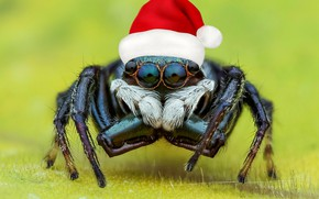 Picture look, macro, red, background, photoshop, spider, New year, the trick, cap, cap, jumper, spider, the …