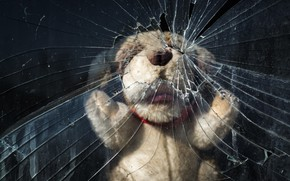 Picture glass, toy, bear