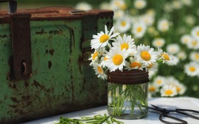 Picture flowers, chamomile, Bank, chest, iron, a bunch, scissors, chamomile field