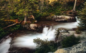 Picture forest, trees, nature, stones, rocks, thickets, vegetation, foliage, waterfall, stream, stage, log, cascade, the bushes