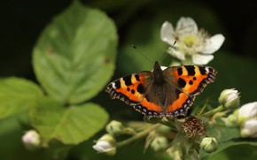 Picture summer, leaves, macro, flowers, butterfly, white, bokeh