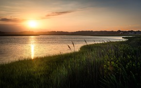 Picture summer, grass, the sun, lake, dawn, shore, morning, pond