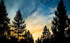 Picture sky, sunset, sun, silhouette of tree