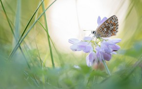 Picture flower, summer, grass, macro, light, background, butterfly, blur, clover, insect, bokeh