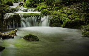Picture forest, stones, moss, river
