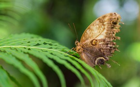 Picture leaves, macro, background, pattern, butterfly, wings, insect, fern, brown, bokeh, beige