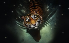 Picture Water, Figure, Look, Cat, Tiger, Face, Art, Tiger, Water, Cat, Striped, by Bianka Faragó, Bianka …