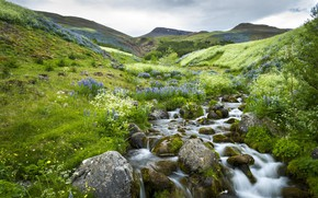 Picture greens, flowers, stream, spring, meadow, Lupin