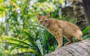 Picture cat, grass, cat, look, face, leaves, light, pose, kitty, wall, tree, red, log, bark, sitting, …