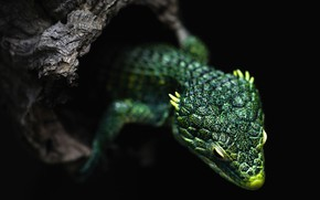 Picture tree, lizard, black background, dragon, green, reptile, the hollow